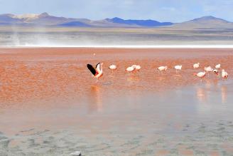 flamingo-1490844_1920