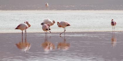 flamingos-2099640_640