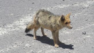 fox-2009558_1920