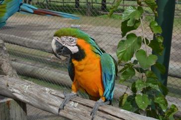 bird-1179348_1280
