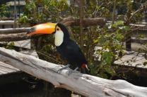 bird-1179349_1280