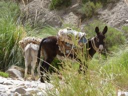 donkey-74783_1280