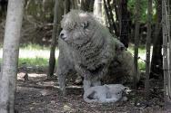 sheep-776451_1280