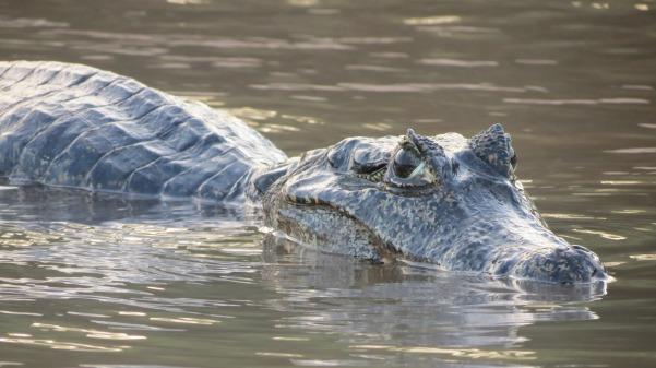 alligator-928912_1920