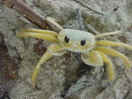 crab-1481621_1280