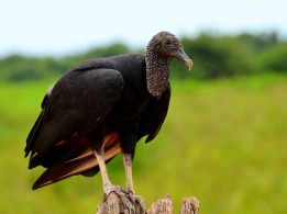 vulture-2164802_1920