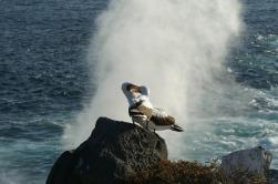 albatrosses-1220333_1920