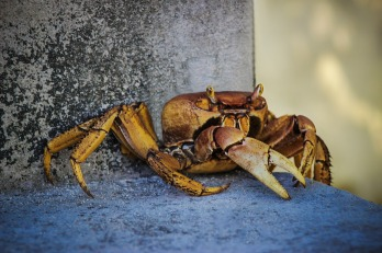 crab-2428744_1920