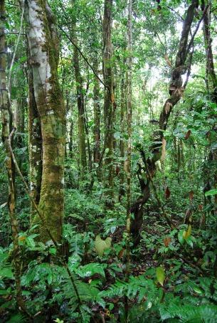 jungle-240501_1280
