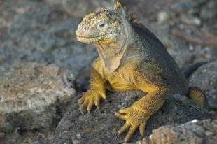 lizard-2113966_1920