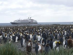 manchot royal antarctique