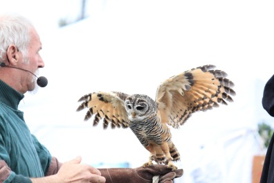 owl-1595377_1920