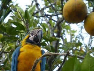 parrot-908732_1280