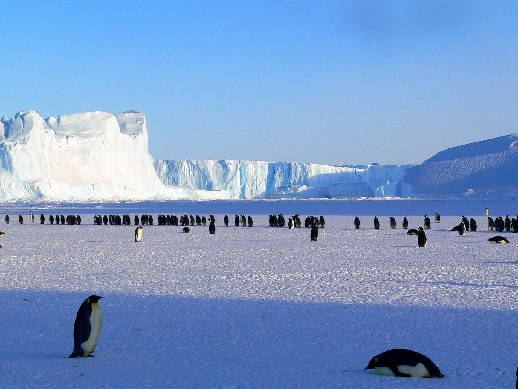 penguins-emperor-antarctic-life-48814.jpeg