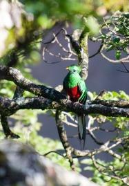 quetzal-2139297_1920