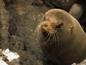 sea-lion-298333_1920