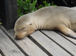 seal-1308597_1920