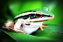 treefrog-765123_1920