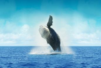 whale-605918_1920