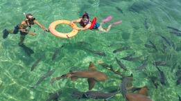 belize requin