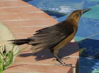 bird-1148288_1920