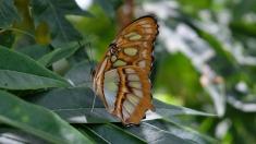 butterfly-2610126_1920