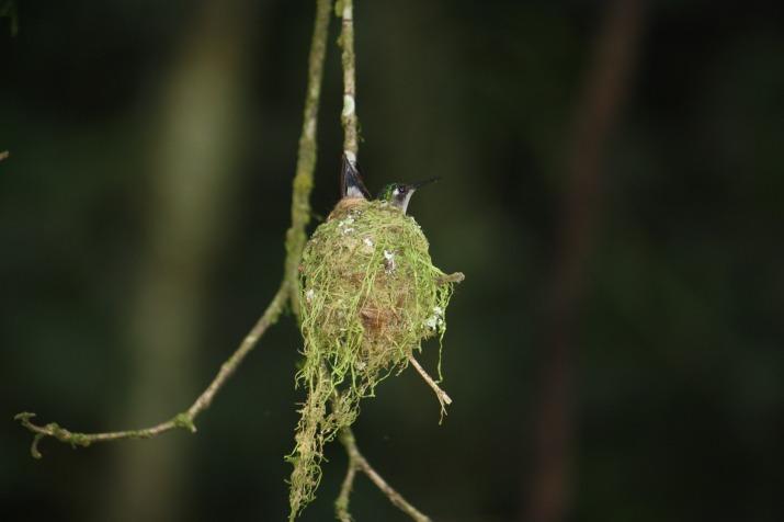 hummingbird-1680742_1920