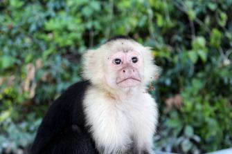 monkey-1249559_1920