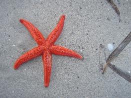 starfish-1159212_1920