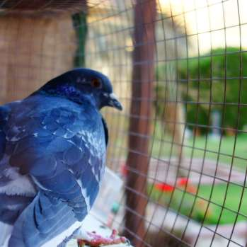 2922x2213-3061000-bird_bird-house_birds-eye-view_birdcage_cage_caged_garden_greens