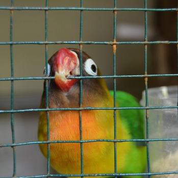 bird-2372870_1920