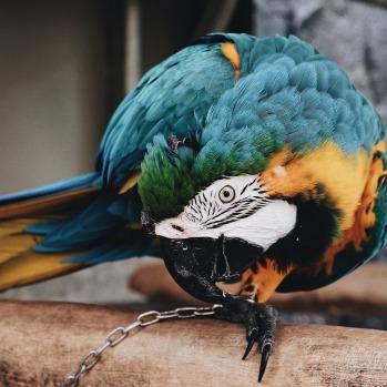 bird-2560387_1920