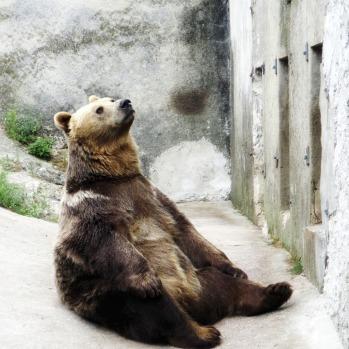 brown-bear-1633234_1920