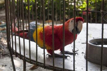 caged-2734009_1920