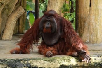 monkey-1826413